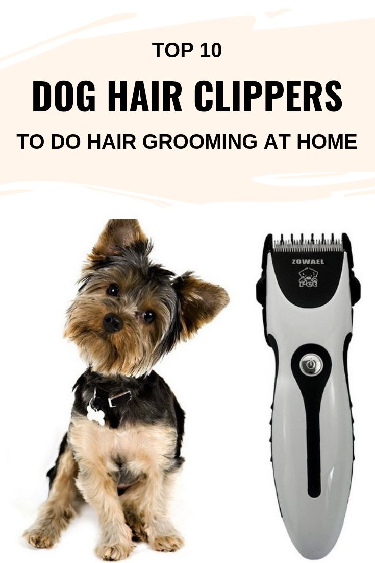 Top 10 Dog Hair Clippers to do Hair Grooming at Home
