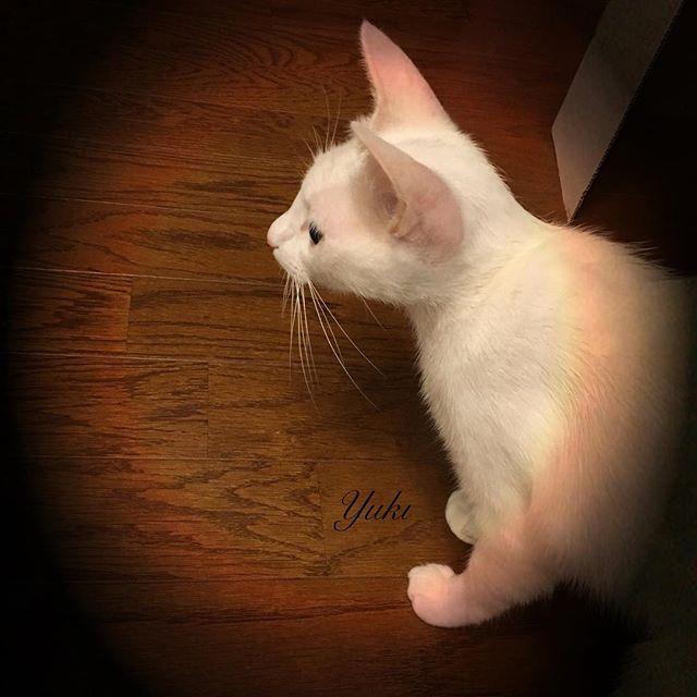 今朝の雷と雨の音がこわかったので変な時間に眠そうなユキちゃんです😅  #cat #猫 #ねこ #愛猫 #譲渡会 #里親 #そめごろう #キジトラ #きじとら #子猫 #仔猫 #ゆめ #yume #夢 #ゆき #yuki #ねこ部 #こねこ #可愛い #cute #癒し #宝物 #にゃんすたぐらむ #トライアル #picneko #ピクネコ #ペコねこ部