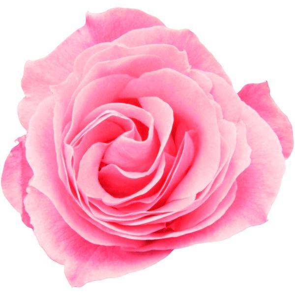 Best 25 Flower Desktop Wallpaper Ideas On Pinterest: Best 25+ Pink Backgrounds Ideas On Pinterest