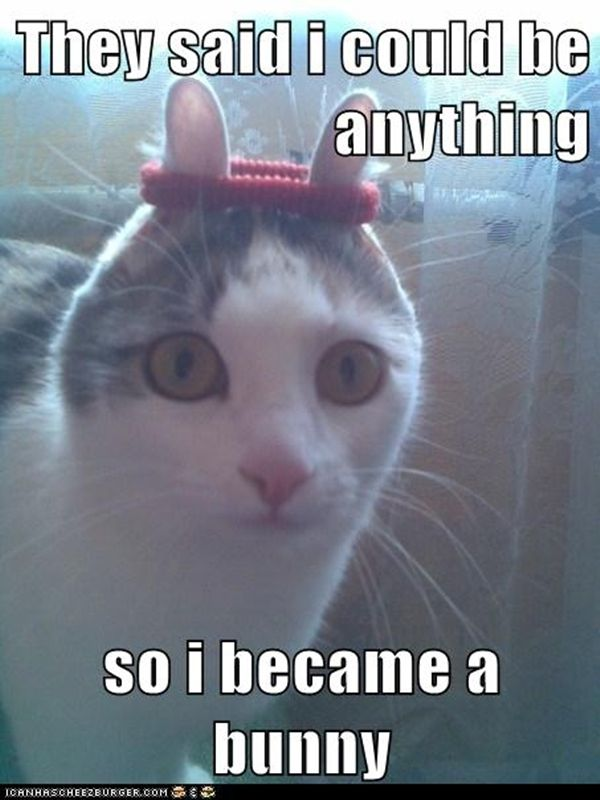 Most funny animal memes and humor pics http://quotesnhumor.com/?p=172