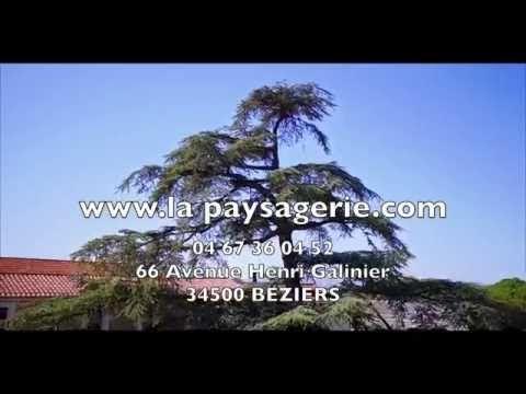 La Paysagerie : Jardinerie à Béziers, Pépinière, Materiel espace vert pour paysagiste