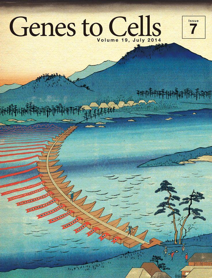 Genes to Cells 表紙ギャラリー - 日本分子生物学会