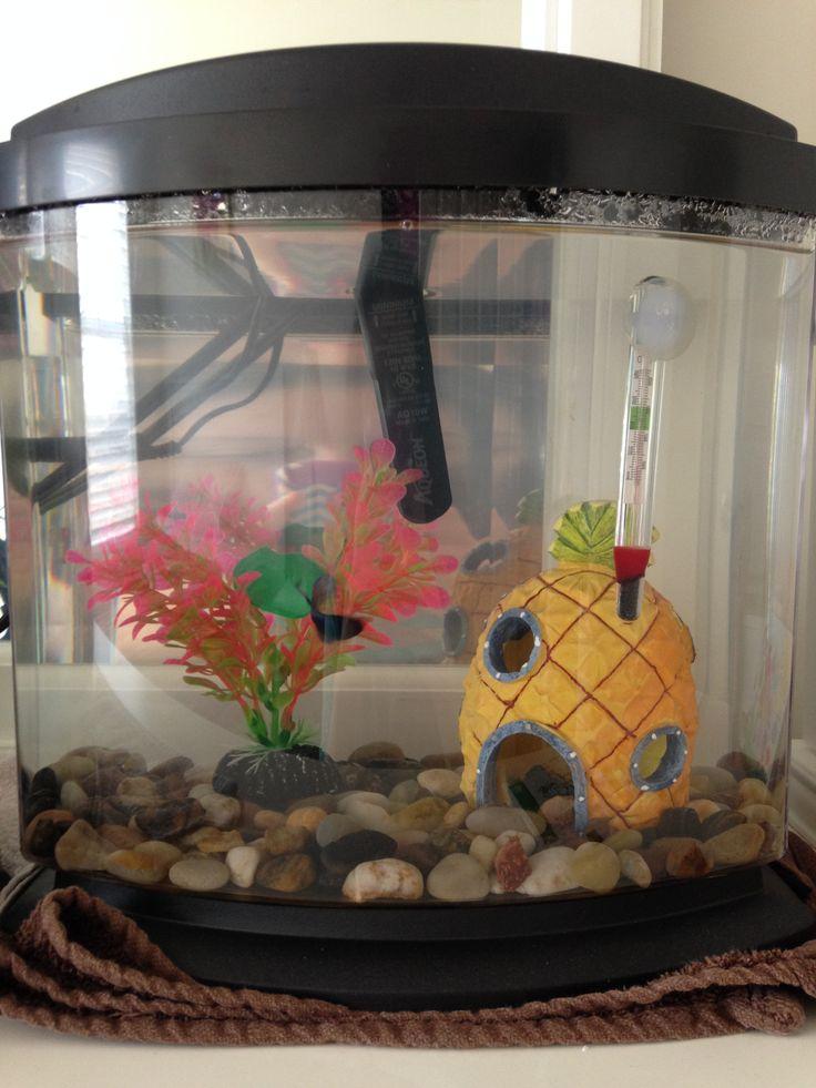 65 best betta fish tanks images on pinterest fish tanks for Betta fish tank heater