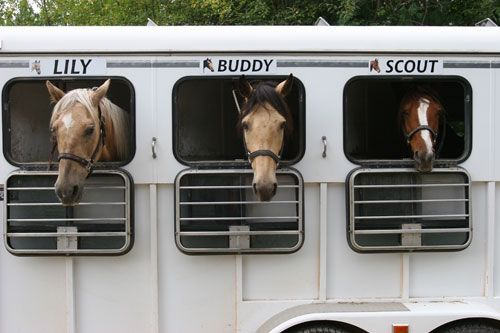 10 Common Horse Trailer Mistakes You Are Probably Making - See more at: https://www.doubledtrailers.com/10-common-horse-trailer-mistakes-you-are-probably-making/#sthash.o5aUxWsO.dpuf