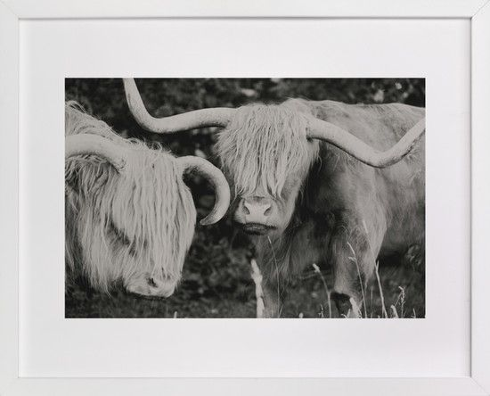 Highland CowsWall Art, Highland Cow, Highlands Cows, Amy Carroll, Cows Limited, Art Prints, Minted Com, Products, Editing Art