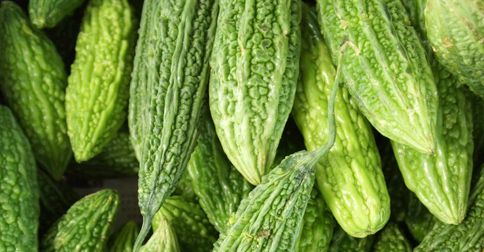 Amazing results have been discovered by scientists investigating the anticancer potential of the weird fruit bitter melon. Long used as a folk remedy for diabetes, bitter melon is now...