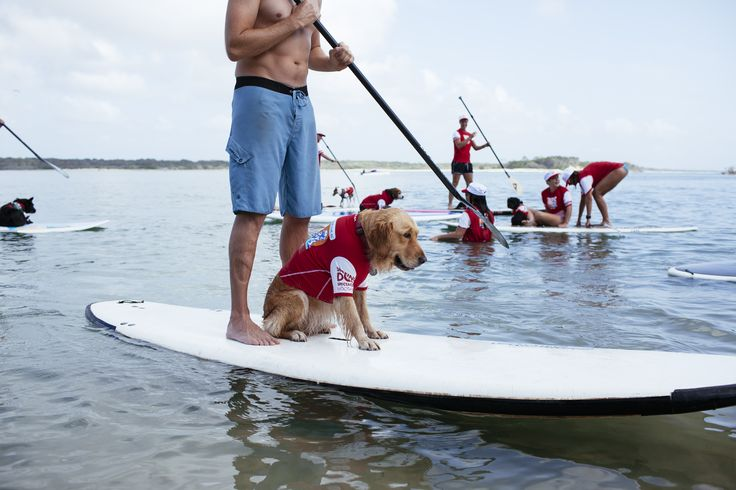 Surfing lessons at the Noosa dog beach
