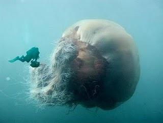 Go scuba diving.