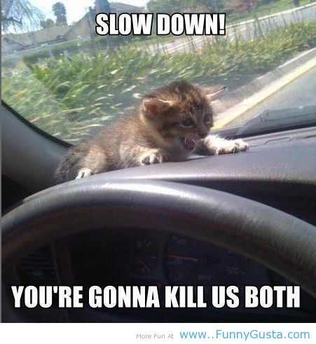 animal quotes pictures | drive slow advice, kitty sayings, funny animals, fun cat - inspiring ...