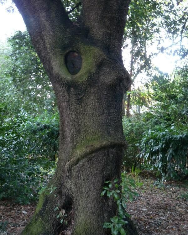 At dusk, Nigel Farage goes into the woods of Old England and turns into a nostalgically racist tree.