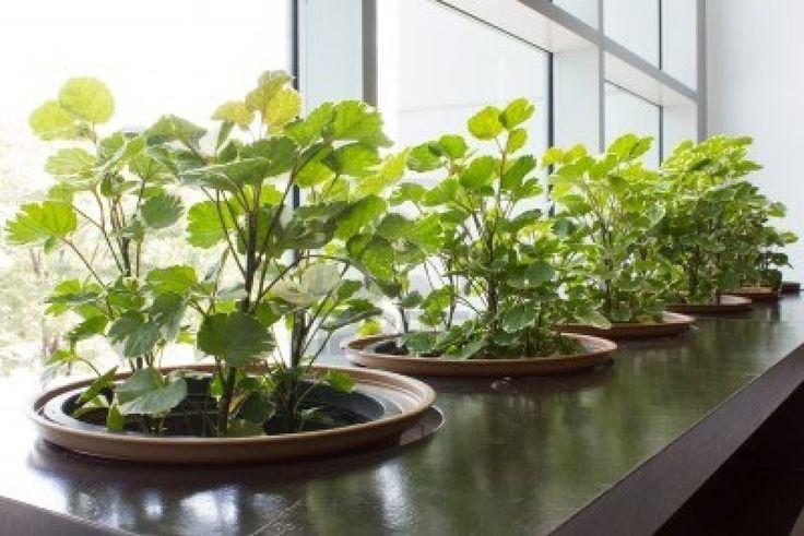 17 Best Images About Indoor Garden On Pinterest Gardens