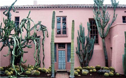 pink + cacti