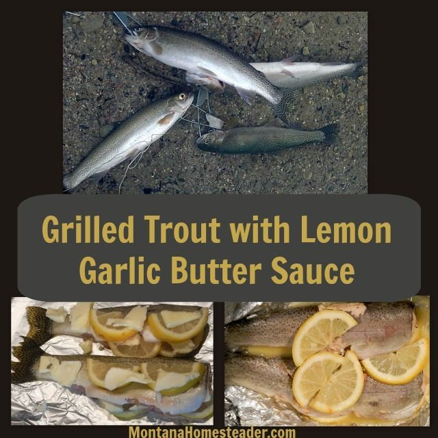 This recipe for grilled trout with lemon garlic butter sauce is simple, easy and delicious! It is a great recipe to make over a campfire in the woods or at home on the grill.   Montana Homesteader