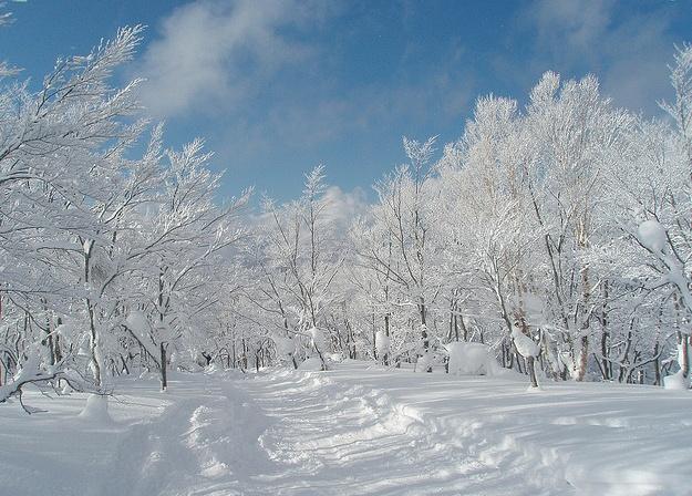 3 Best Ski Resorts in Japan