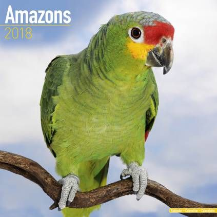 Avonside Tier Kalender 2018Avonside Tier Wandkalender 2018: Amazons Parrot - Amazonen Papagei