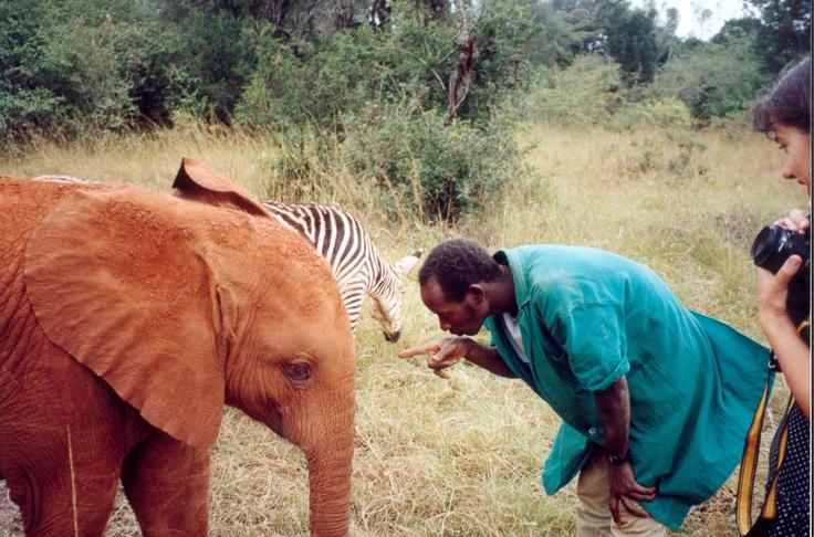 David Sheldrick Wildlife Trust elephant orphanage, Nairobi, Kenya