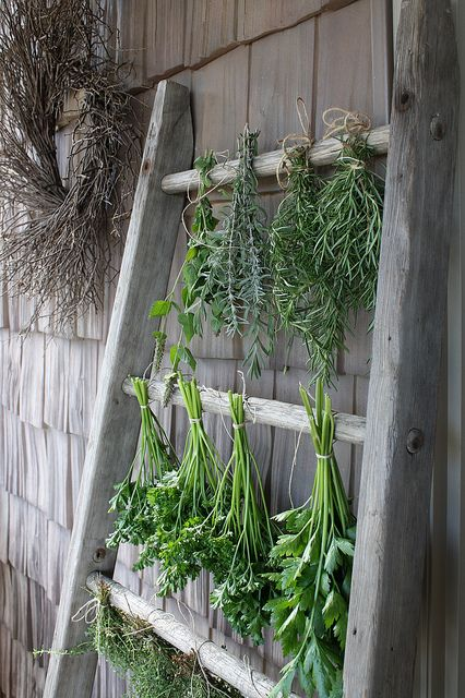 Herbs hang to dry on an antique ladder.  When you've got herbs to dry, anything goes.
