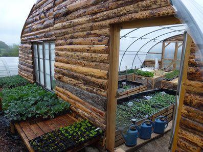 7 plants originaux faciles à cultiver - Formation permaculture et jardin pédagogique en Bourgogne