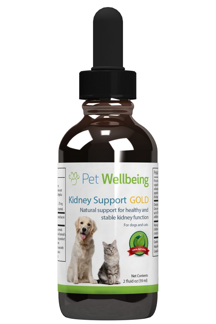 Chinese dog herbal therapy - Best 25 Treatment For Kidney Infection Ideas On Pinterest Urinary Tract Infection Natural Cold Remedies And Kidney Infection