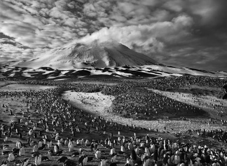 Maior concentração da terra dos pinguins habita a pequena ilha Zavodovski, uma das nove ilhas vulcânicas na cadeia Sandwich do Sul, no extremo do Atlântico Sul. Um estudo de 1997 estima-se que é o lar de cerca de 750.000 casais de Pinguins de Chinstrap, bem como uma grande colônia de pinguins do macarrão.  O vulcão ativo da ilha é visível no fundo. As Ilhas Sandwich do Sul são Territórios Britânicos Ultramarinos.  Fotografia: Sebastião Salgado.