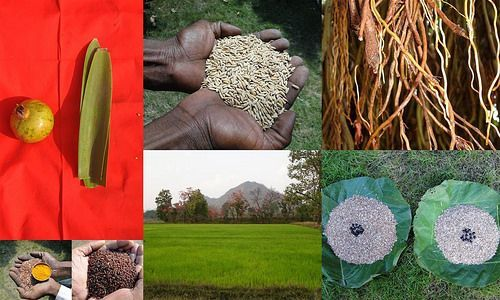 Validated and Potential Medicinal Rice Formulations for High Blood Pressure (Hypertension) with Diabetes mellitus Type 2 (डायबीटीज या मधुमेह) Complications (TH Group-362 special) from Pankaj Oudhia's Medicinal Plant Database