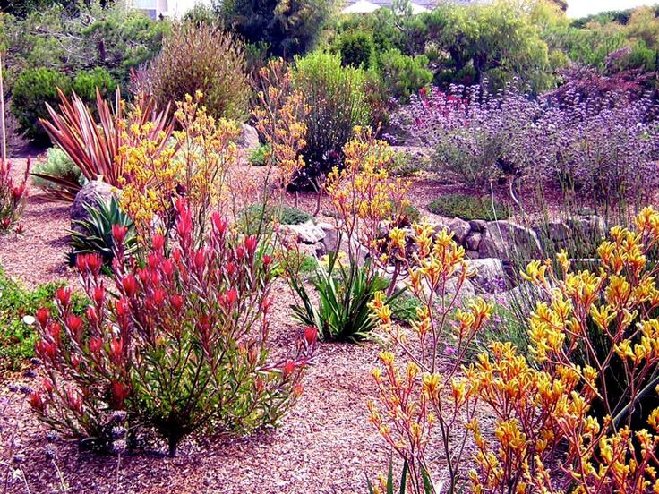 Love the color combination in this drought tolerant garden