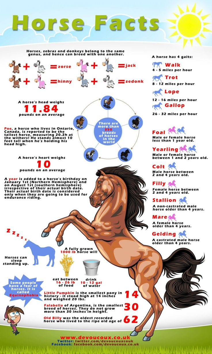 Interesting Facts About Horses  Infographic