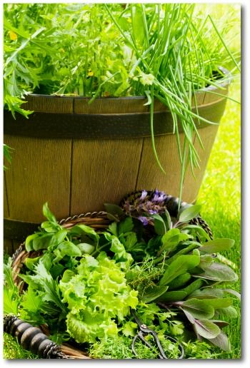 The 25 best Small ve able gardens ideas on Pinterest