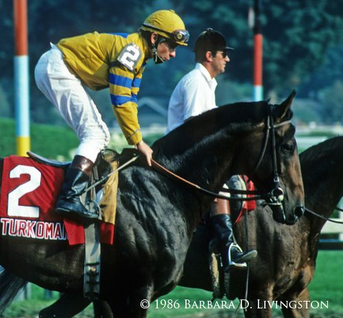 Turkoman at age 4 in Saratoga. He lived to be 34 years old, living out his days on a ranch in California- visiting with an old friend | Daily Racing Form