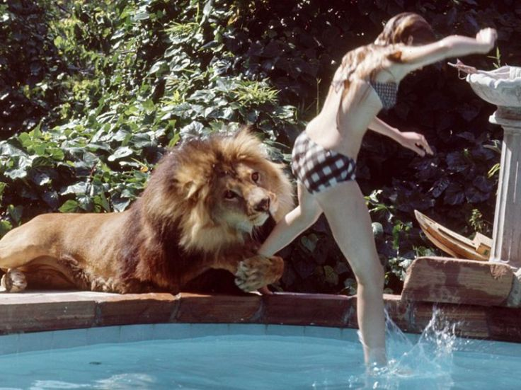 Tragedic ending of family who lived with a LION