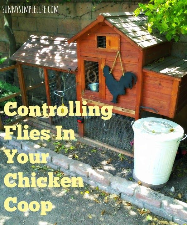 flies in the chicken coop and how to control them, backyard chickens, urban chickens