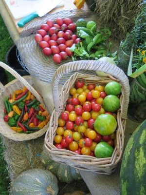 The Fall Organic Farm (3)