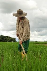 Innovación para el mejoramiento de la competitividad de la Altillanura Colombiana