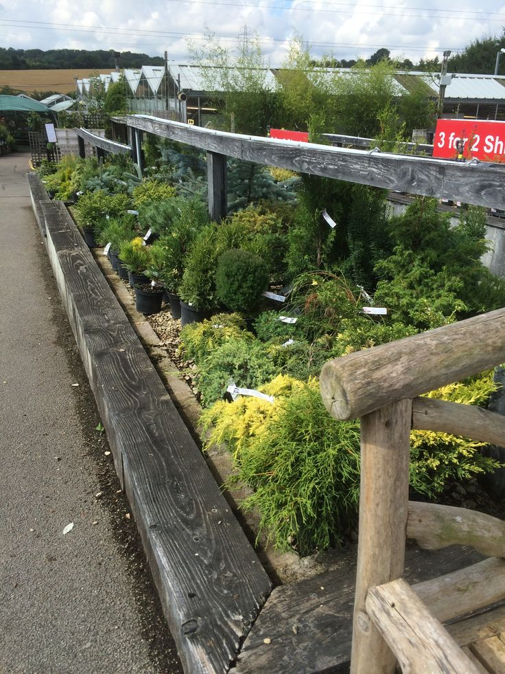 25+ best images about Hilliers Garden Centre - Hemel Hempstead on Pinterest | Home Landscapes ...