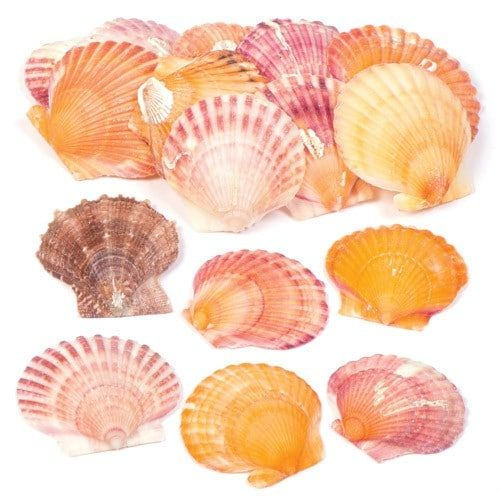 Approx. 40 shells per pack#Shell size approx. 35mm-75mm#Add to collage or use to create beach and seaside themed displays#Use with our acrylic paint, extra strong glue or stick-ons (not included)#Natural product so colours and sizes will vary