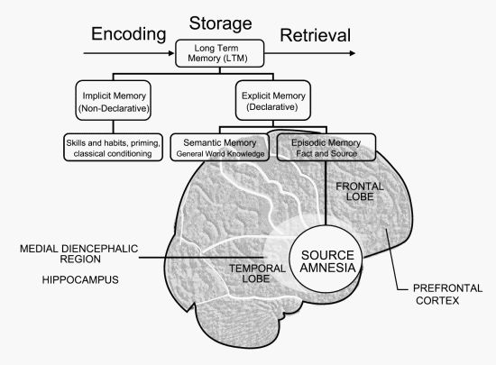 """Neuropsychological Generation of Source Amnesia: An Episodic Memory Disorder of the Frontal Brain Temporary Anteriograde amnesia can be caused by: medications, benzodiazepine anesthesia or """"conscious sedation"""",head trauma – post-traumatic amnesia or PTA,and from Transient Global Amnesia (TGA).TGA is a sudden onset of temporary anteriograde amnesia usually lasting lasting 4-12 hours."""