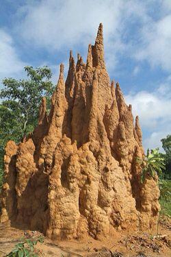 Termite Mound (Australia)