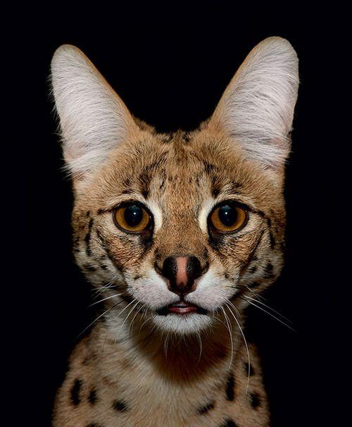 Relativ Les 25 meilleures idées de la catégorie Animal nocturne liste sur  EU22