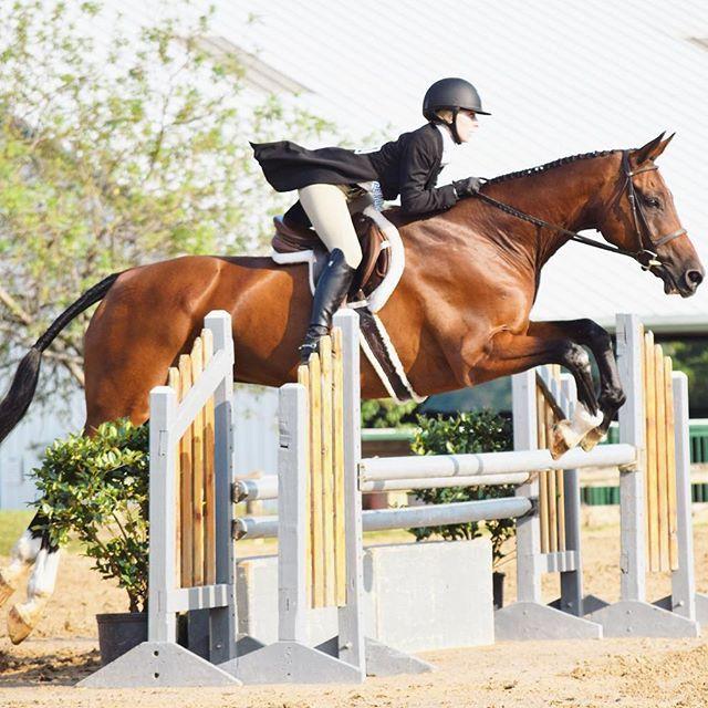 From Equestrian Performance Pinterest Ercequestrian
