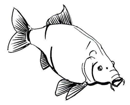 необычных рыба карп картинка раскраска одна местных достопримечательностей