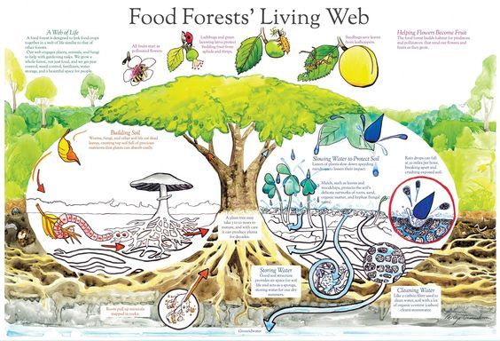 Establishing a Food Forest With ChickensREALfarmacy.com | Healthy News and Information