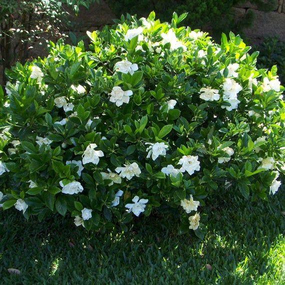 Pin On Payne Plants