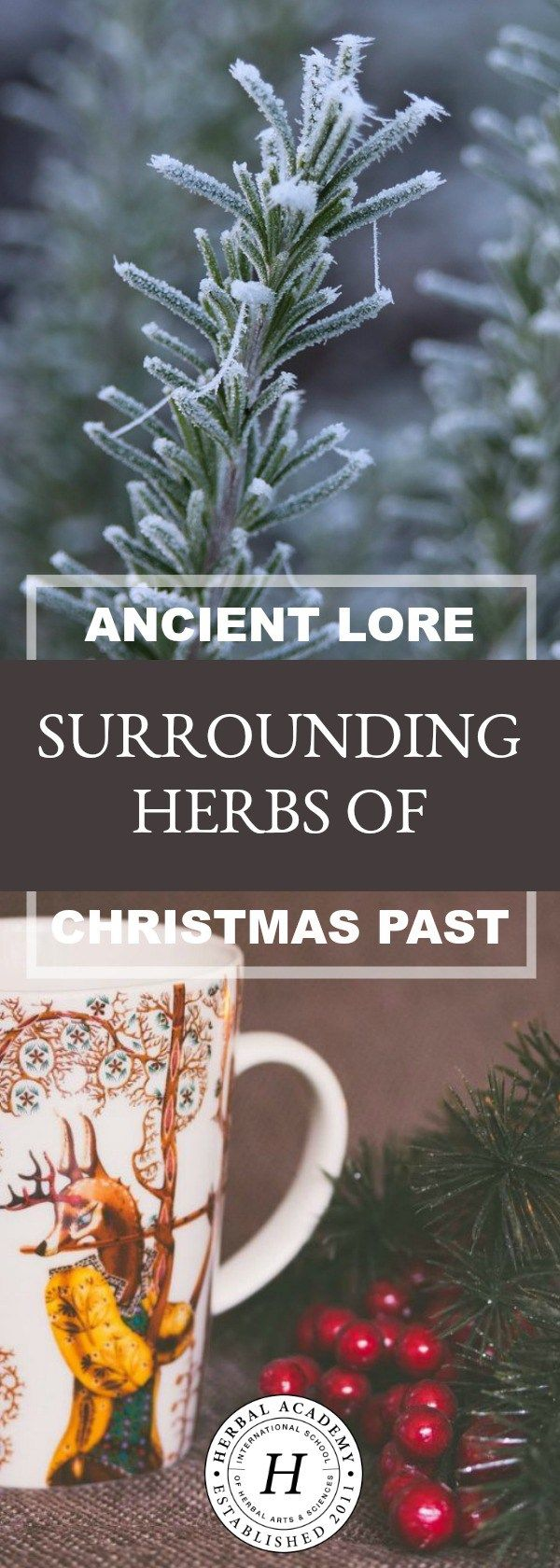 Ancient Lore Surrounding Herbs Of Christmas Past | Herbal Academy | Have you ever wondered about the ancient lore surrounding the herbs of Christmas past? Here are several entertaining short stories for you to enjoy!