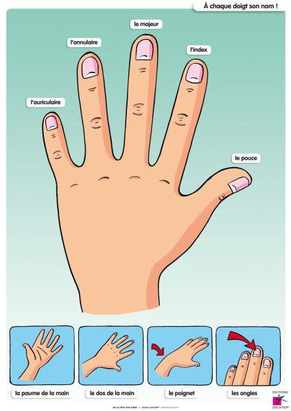 De la tête aux pieds - Exemple de tableau Dossier pédagogique pour apprendre les différentes parties du corps, les 5 sens et les règles élémentaires de l'hygiène du corps.