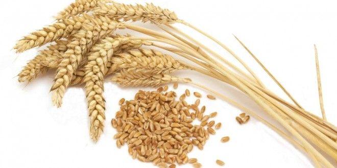 Çölyak hastalığı diğer adı ile gluten enteropatisi yaşam boyu sürecek bir bağırsak hastalığıdır. Daha basit bir tanım ile anlatılması gerekirse buğday, yulaf, arpa ve çavdar gibi tahılların içinde bulunan gluten adı verilen bir proteine karşı ince bağırsakların hassasiyetidir.