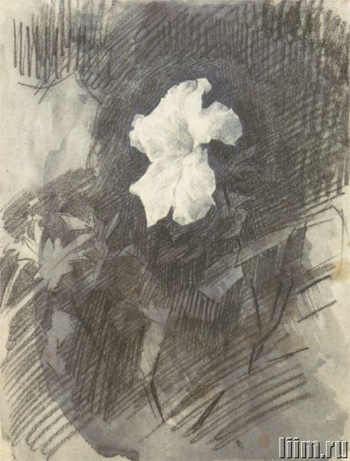 Врубель Михаил Александрович. Белая азалия с листьями. 1886-87. Рисунок
