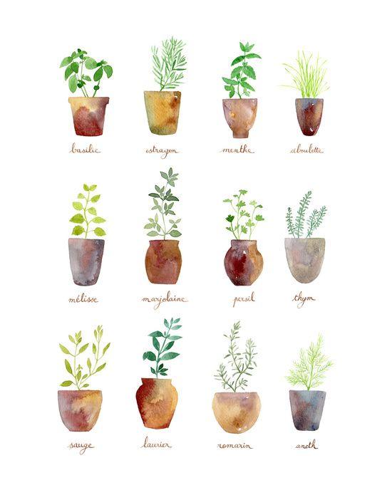 culinary herbs art print - Kitchen Artwork Ideas