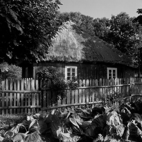 an old cottage in Podlasie - east of Poland