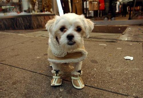 My puppy had this same coat