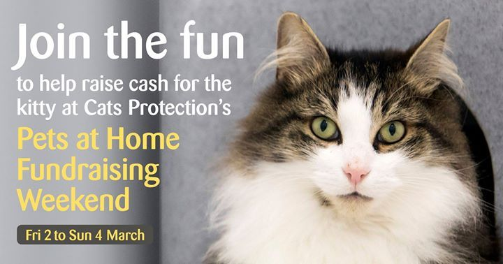From Friday 2 To Sunday 4 March Cats Protection Has A Dedicated Three Day Fundraising Event At Pets At Home Stores Across The Uk Buy A Kitten Cats Simons Cat
